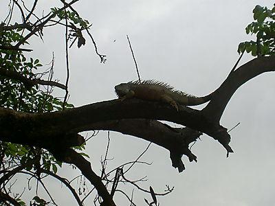 2008.Puerto Vallarta 014