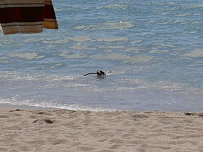 2008.Puerto Vallarta 056