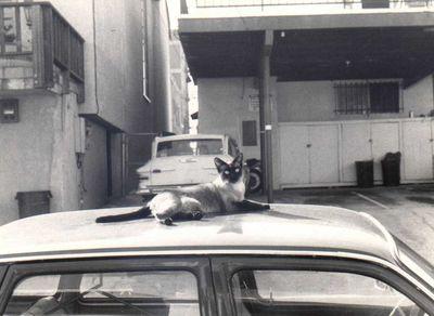 1985 Mus Roof