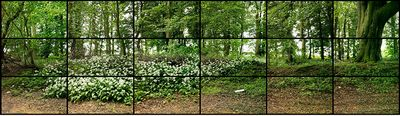 May 11th 2011 Woldgate Wood 1