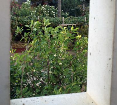 Gardenwindow