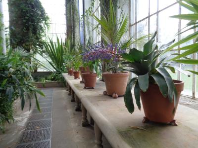 GardenPalmHouse2